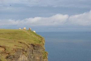 Für diese Schafe ist Höhenangst ein Fremdwort